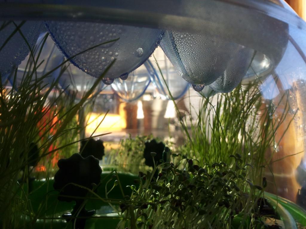 Galileo Experimentierkasten Ökosystem Ansicht mit viele Tropfen ('Regen')